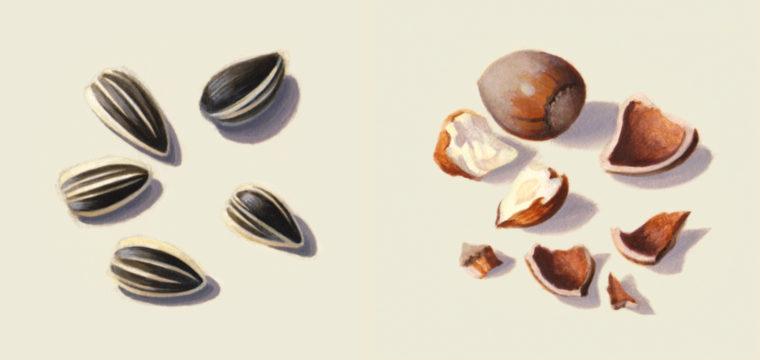 tournesol-noisette