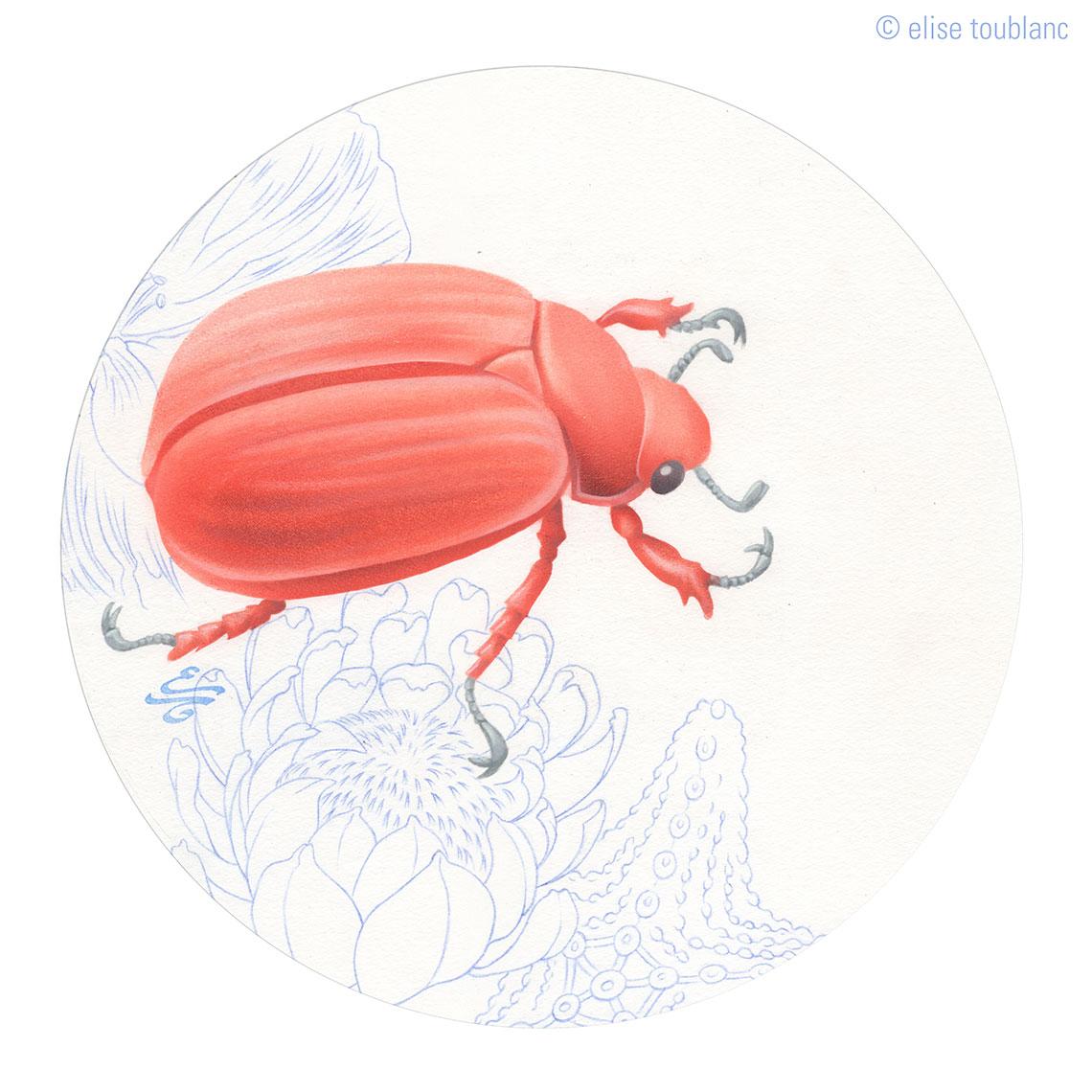 scarabée-chrysina
