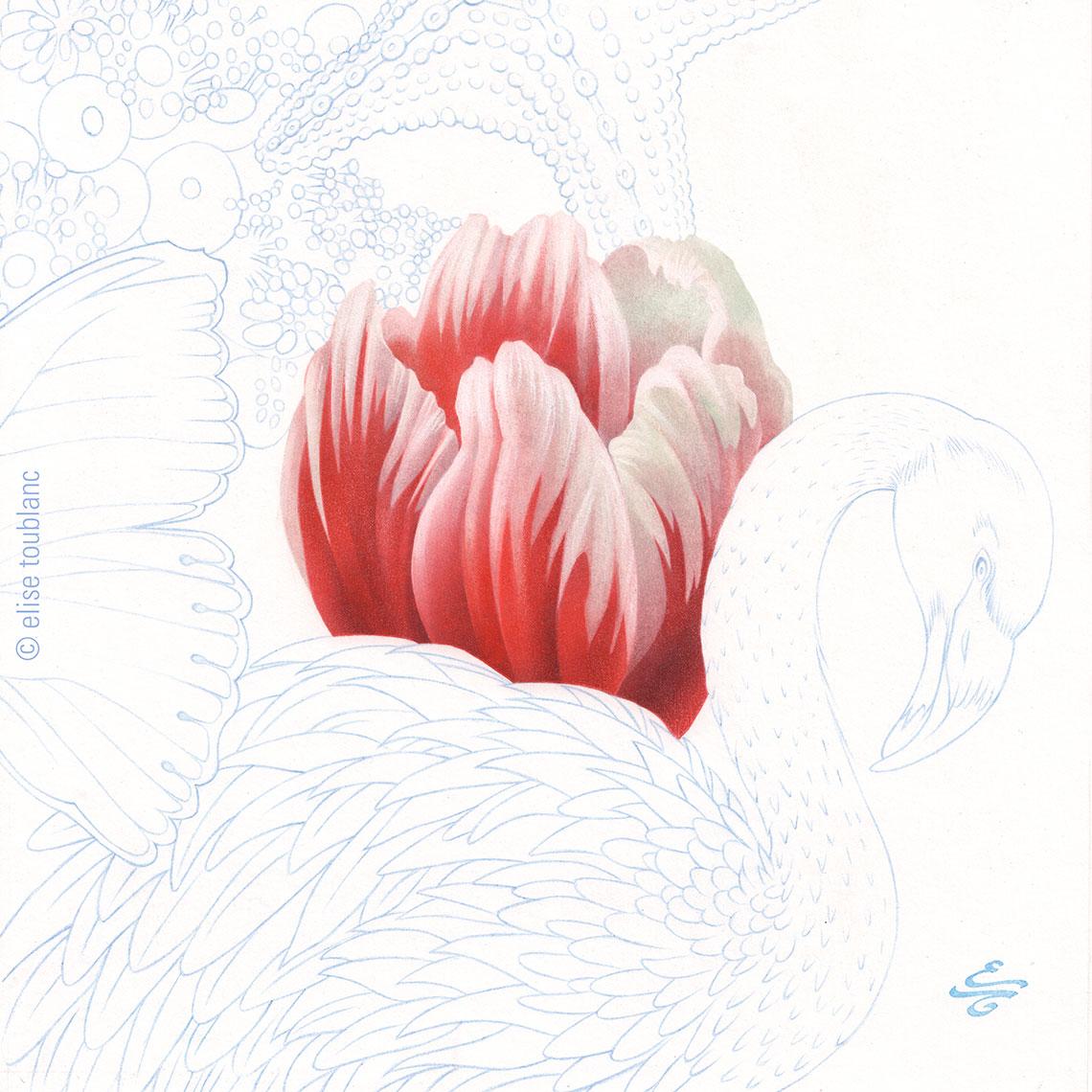 tulipa-x