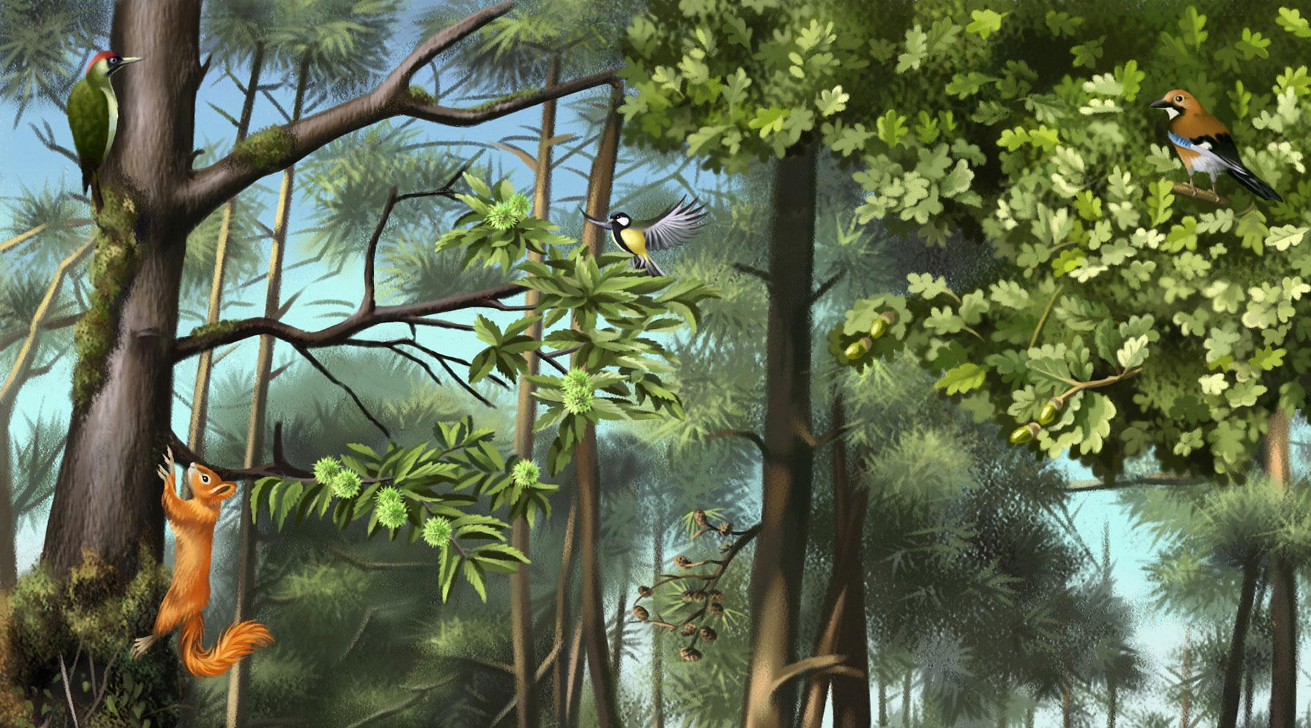 arbres-du-sous-bois