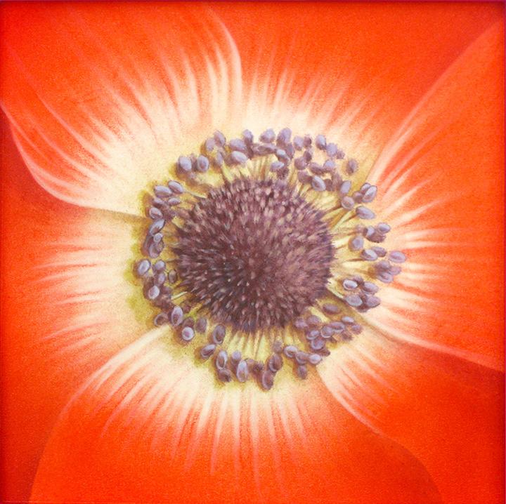 dessin-anemone
