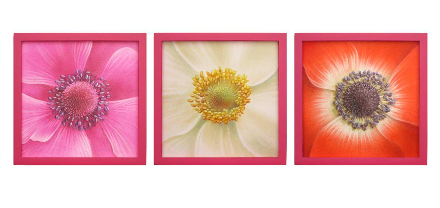 anemones-dessin